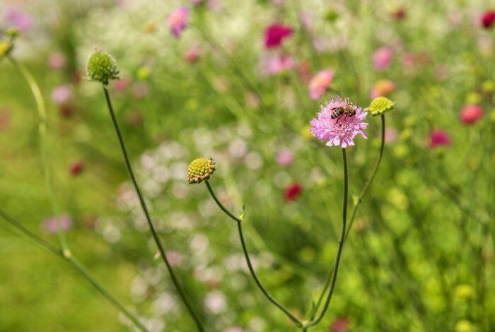 Krásnou a udržitelnu zahradu předvedl atelier Flera na víkendu otevřených zahrad na zámku Mitrowicz