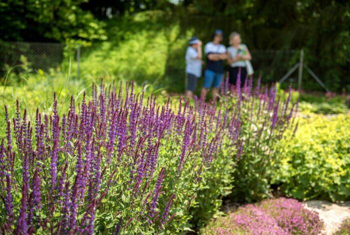 zahradní atelier Flera sklízí úspěchy se svou prací na zahradě zámku Mitrowicz